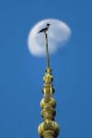 Minare Karga Ve Ay Manzarası