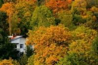 Şavşat'da Sonbahar