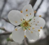 Bahar Gelirken..