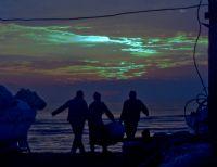 Balıkçı Telaşı