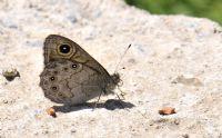 Kelebek!  Betonda Da Güzelsin
