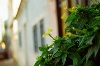 Beton Duvarlar Ve Çiçek