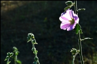 Çiçek Severlere...