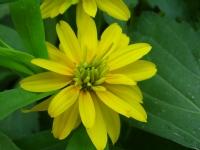 Ah Su Tatlı Çiçekler