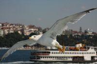 Ahh İstanbul