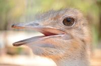 Büyük Kuşun Gözünden
