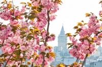 Istanbul'a Renk Veren Bir Güzellik
