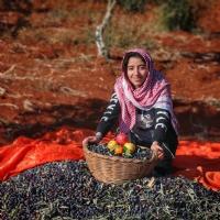 Zeytin Hasadı - Gaziantep
