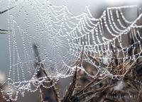 Örümcek 2