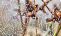 Örümcek Ağı - Fotoğraf: Mehmet Gören
