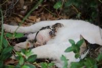 Kedilerimizin Sütle Tanışması