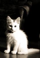 Pisicik<3