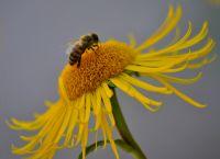 Arı Vız Vız Vız :)
