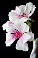 Balkondaki Çiçekler
