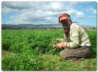 Mevsimlik İşçi