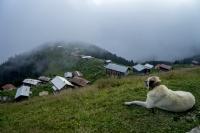 Pokut yaylas� - Foto�raf: Azmi Karadeniz