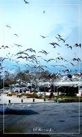 Uçan Kuşalar, Martılar
