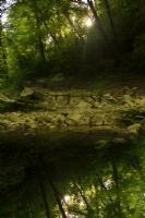 Orman Masalı