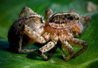 Örümcek4