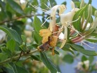 Arı Ve Mucizesi