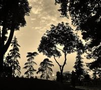 Gün Batımı Ağaçları