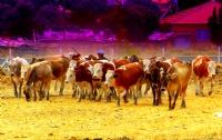 Pastoral Hayat