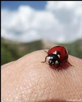 Uğur Böceğim