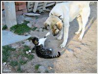 Tokatçı Kedi. :)