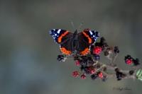 Kelebekçe Şiirler...