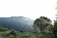 Yeşil Manzara