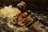 Hipopota-potamus