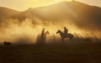 Yılki Atları - Fotoğraf: Erkan Ölmez