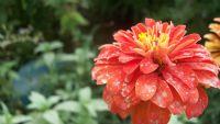 Tozlanmış Çiçek