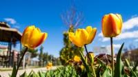 Bahar Dan Yansımalae
