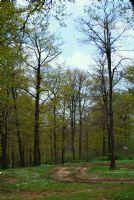 Orman Yolu.