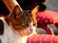 Kedi... Canon Sx30 İle