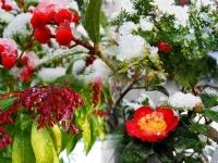 Meyve Bahçesi
