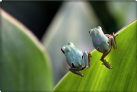 ikizler - Fotoğraf: M.   Atilla Toksoy