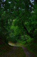 En Yeşilinden