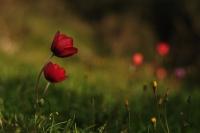 Baharın Renkleri 2
