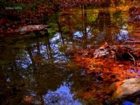 Sonbaharın Suya Yansıması