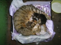 Yeni Dogmus Kediler