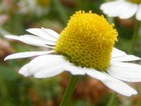 Bikiler Çiçekler Böcekler