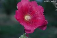 Çiçeklerden
