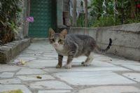 Şüpheci Kedi