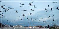 Uçan Kuşlar 2