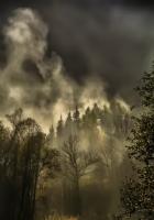 Büyülü Orman