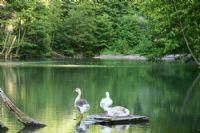 Gölün Kazları