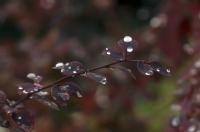 Yağmurdan Sonra Gelen Güzellik