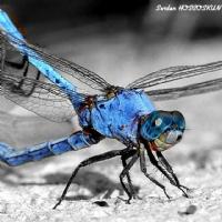 Mavinin En Güzel Tonu
